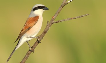 Birding in the Lakes of Northern Greece - 9 Days